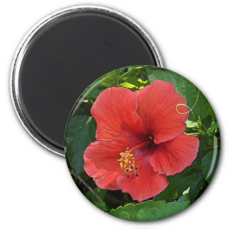 Mini Art Red Hibiscus Magnet