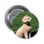 Mini botón del perrito de Goldendoodle Pins