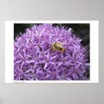 Mini Bumble Bee on Allium Poster