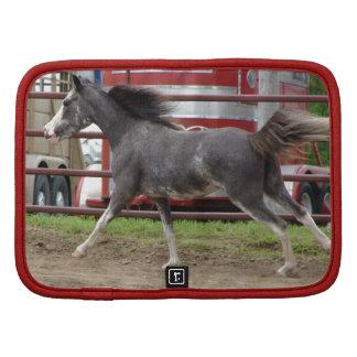 Mini caballo del Pinto en una clase de la libertad Planificador