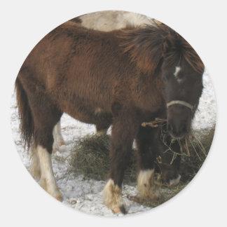 mini caballo pegatina redonda