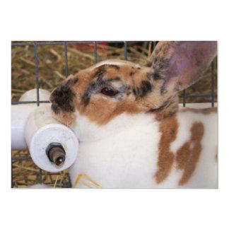 Mini cabeza del conejo del rex del tri color invitación