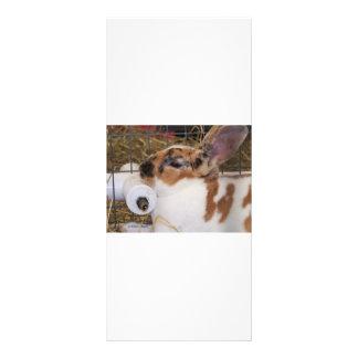 Mini cabeza del conejo del rex del tri color quebr diseño de tarjeta publicitaria