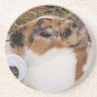 Mini cabeza del conejo del rex del tri color quebr posavasos personalizados