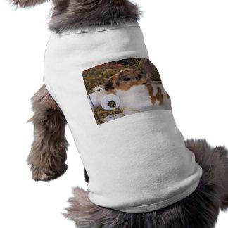 Mini cabeza del conejo del rex del tri color quebr ropa de perro