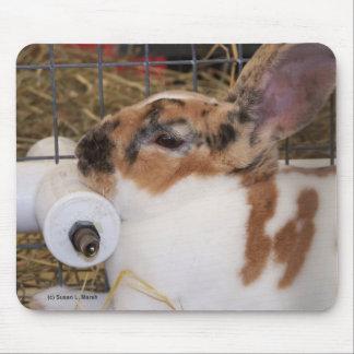 Mini cabeza del conejo del rex del tri color quebr alfombrilla de ratón