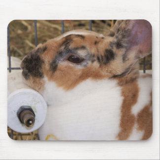 Mini cabeza del conejo del rex del tri color quebr alfombrillas de raton