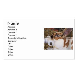 Mini cabeza del conejo del rex del tri color tarjetas de visita