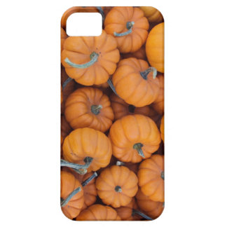 Mini caso del iPhone 5/5s de las calabazas iPhone 5 Carcasa