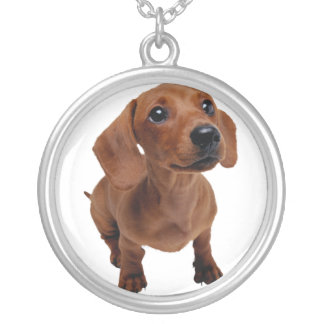 Mini collar del Dachshund