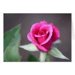 mini color de rosa rosado oscuro felicitación