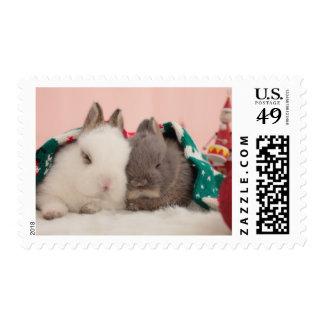 Mini conejos timbres postales
