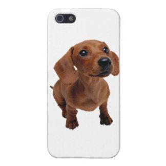 Mini Dachshund iPhone SE/5/5s Case