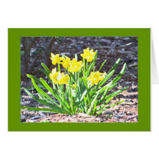 mini-Daffodils card