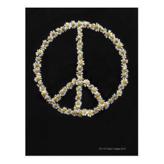 Mini Daisies In a Peace Symbol Post Card