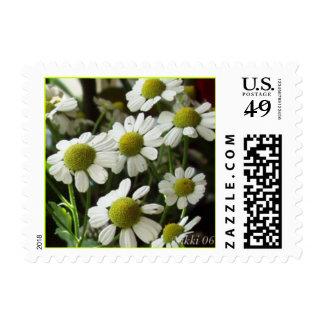 Mini Daisies Postage Stamp