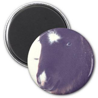 Mini Filly Grunge Fridge Magnet