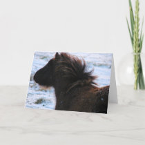 Mini Filly in Winter, Christmas Holiday Card