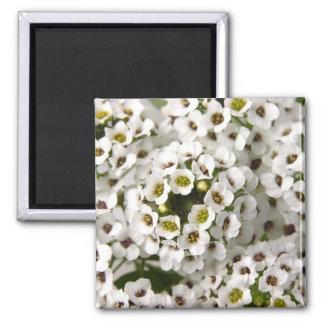 Mini flores blancas imán cuadrado