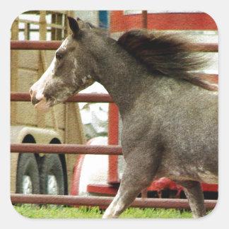 Mini galopes del caballo del Pinto Pegatina Cuadradas Personalizada