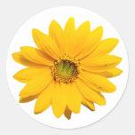 Mini girasol amarillo - flor minúscula del girasol pegatina redonda