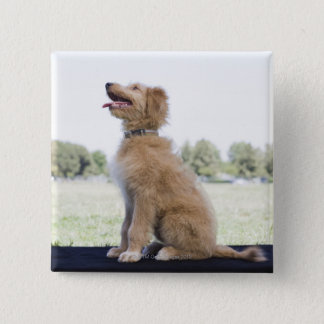 Mini Golden Doodle Button