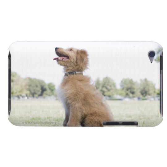 Mini golden doodle iPod touch Case-Mate case