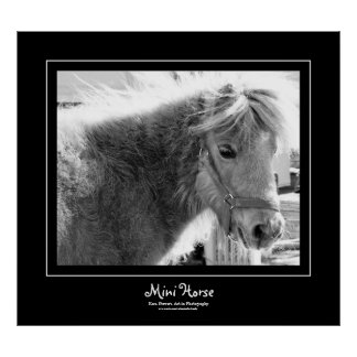 Mini Horse Black Border Poster