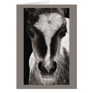 "Mini Horse Colt - ""Baby Face"" Card"