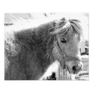 Mini Horse Photo Print