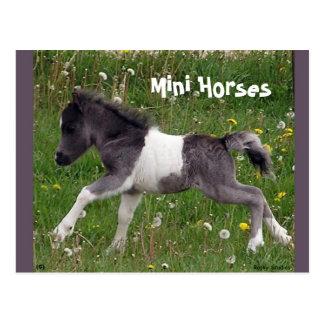 Mini Horse Postcard