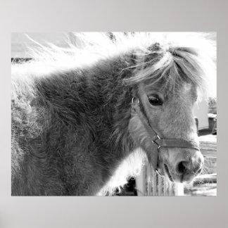 Mini Horse Poster, Today's Best Award Winner Poster