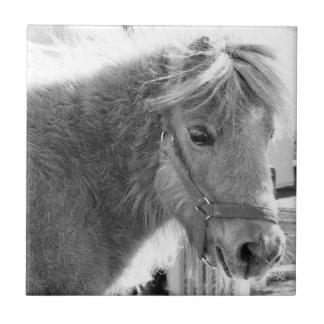 Mini Horse Tile