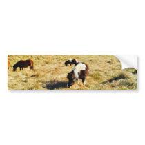 Mini Horses Bumper Sticker