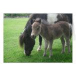 mini horses note card