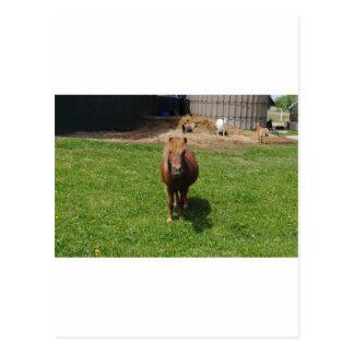 MIni Horses Postcards
