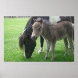Mini Horses Poster