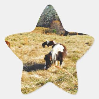 Mini Horses Star Sticker