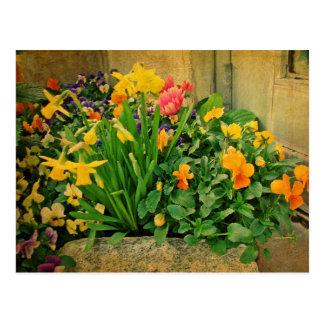 Mini jardín de la primavera postal