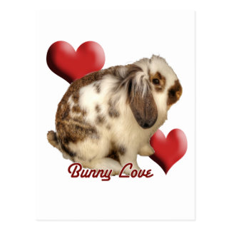 Mini-Lop rabbit Postcard