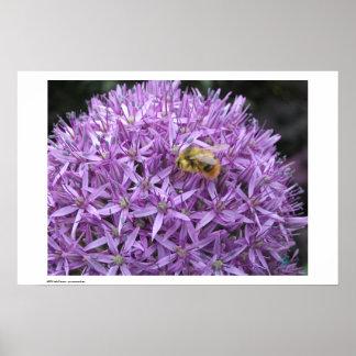 Mini manosee la abeja en allium póster