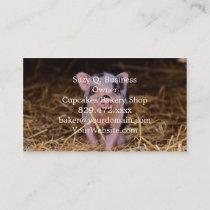 mini pig business card