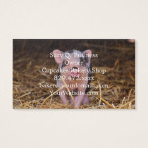 mini pig business card
