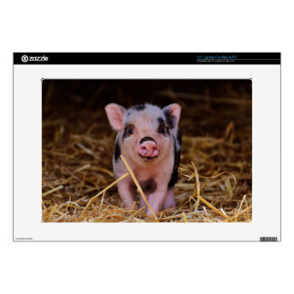 mini pig decals for laptops