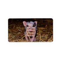 mini pig label