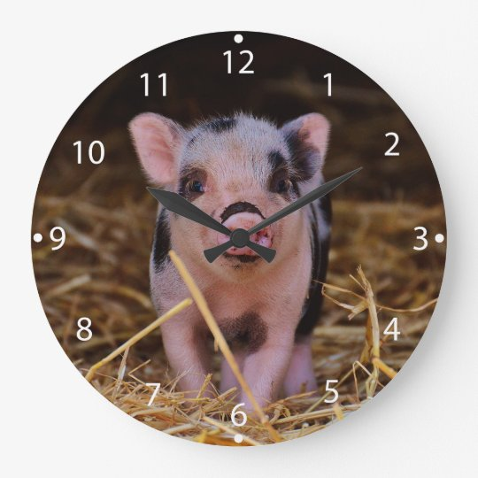 mini pig large clock   Zazzle.com