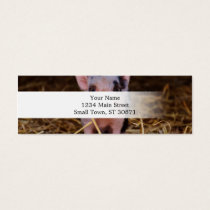 mini pig mini business card