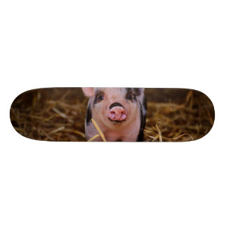 mini pig skateboard deck