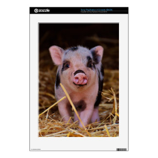 mini pig skin for the PS3