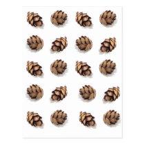 Mini Pine Cones on White Postcard